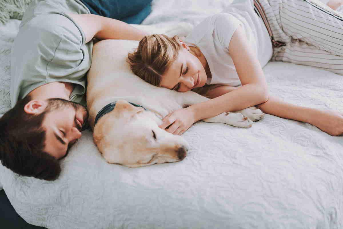 dormire cani