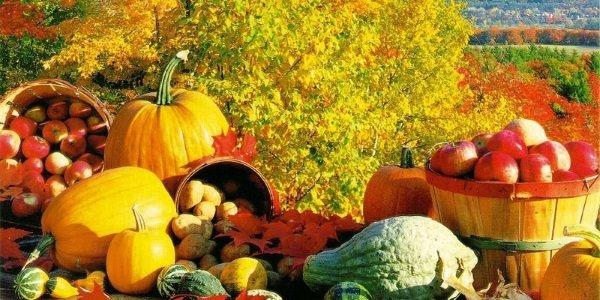 equinozio autunno zucche