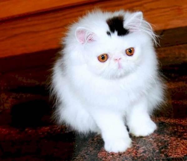 gatti pelo strano1