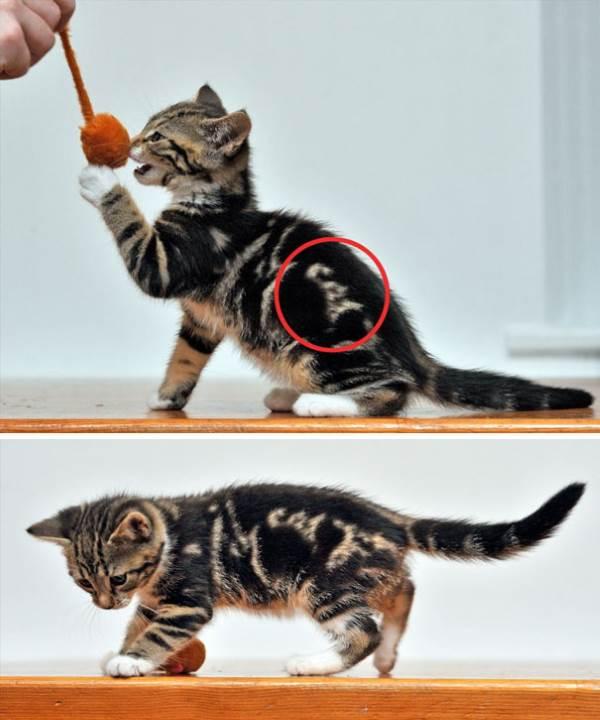 gatti pelo strano4