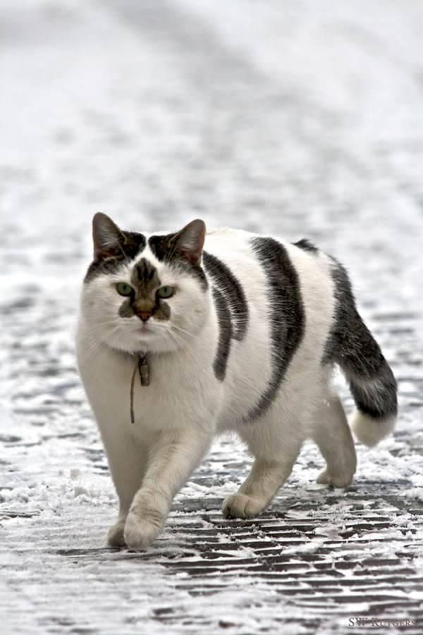 gatti pelo strano9