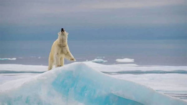 gioco orso polare5