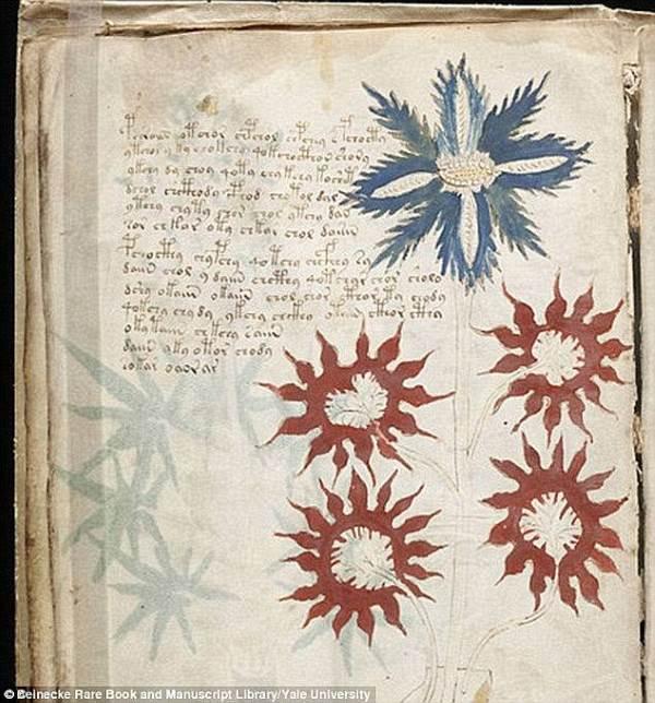 manoscritto voynich3