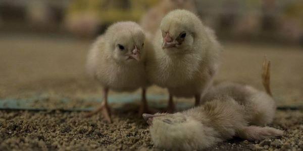 polli Animal Equaulity