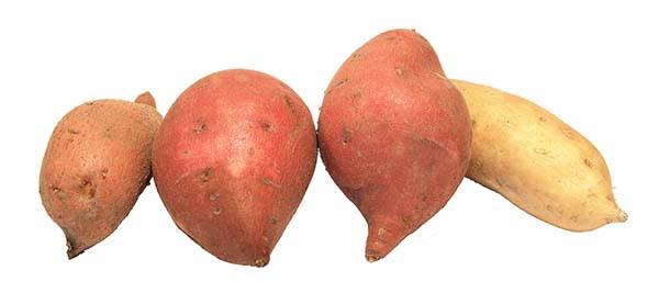 patate dolci varietà
