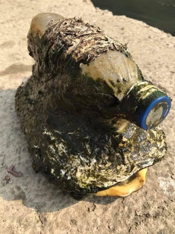 tartaruga bottiglia plastica