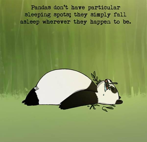 immagini panda