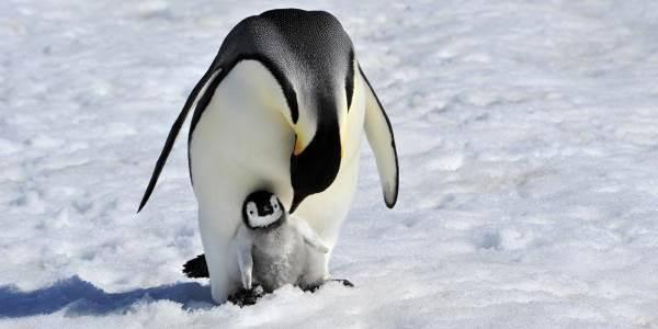 pinguini-morti-cover