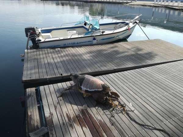 tartaruga sasso2