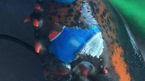 aragosta pespi2