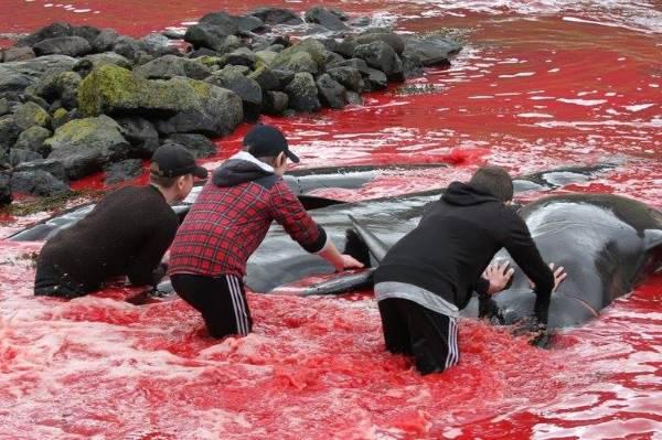 caccia balene1