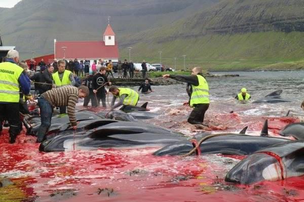 caccia balene3
