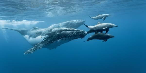 delfini-e-balene_