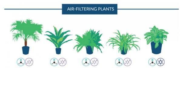 piante-antinquinamento