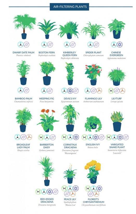 piante depurano aria