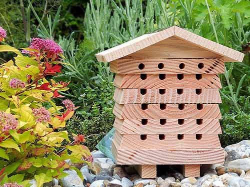 alveare api solitarie