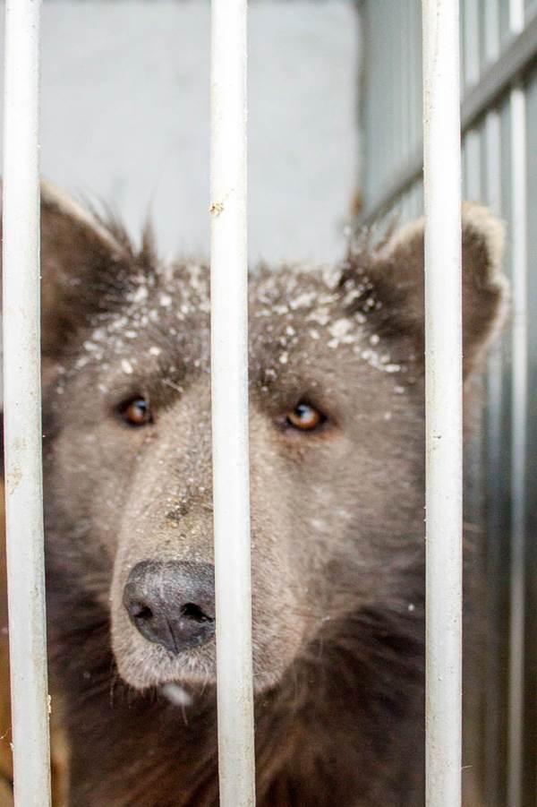 cane orso1