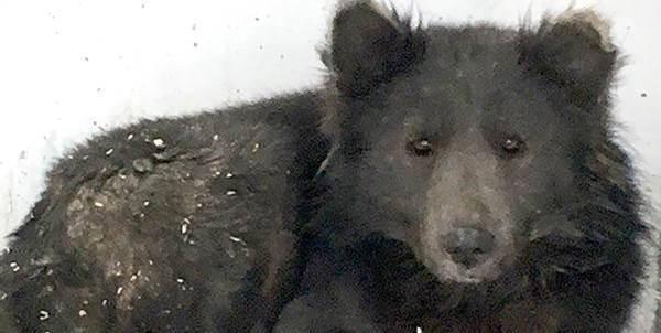 cane-orso