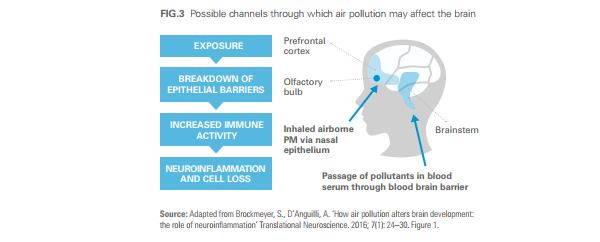 danni cervello inquinamento