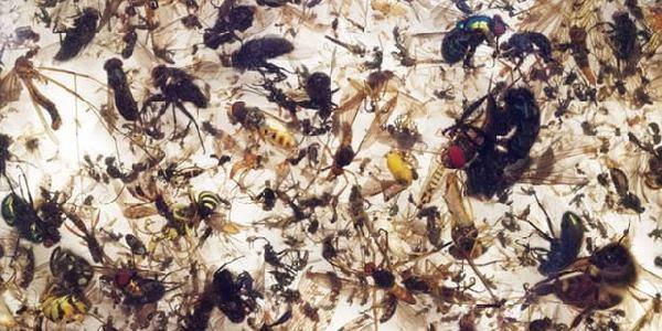 Insetti Entomologisher Verein Krefeld