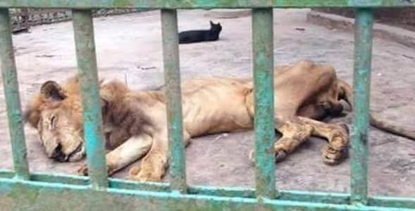 leone zoo morto