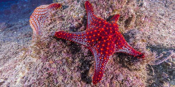 stella-marina