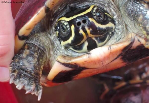 tartaruga mangia serpenti
