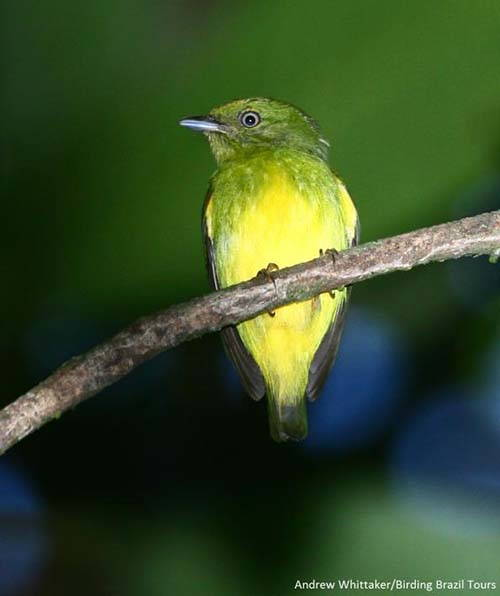 uccello ibrido1