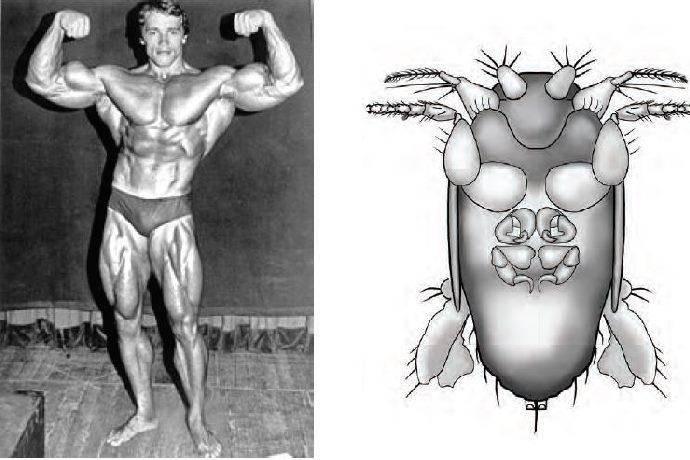 Arnoldi mosca