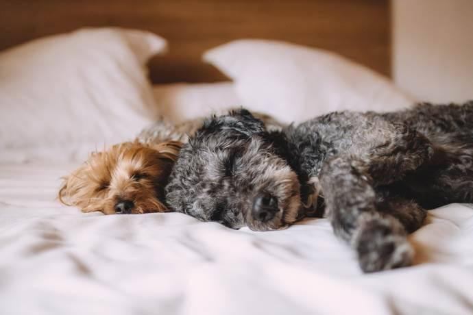 cani letto
