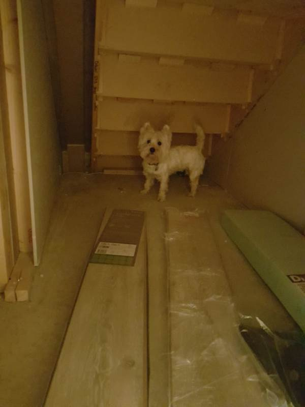 cuccia cane scala4
