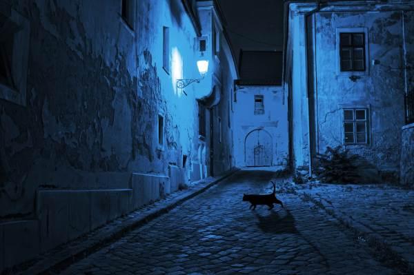 gatto nero superstizione1
