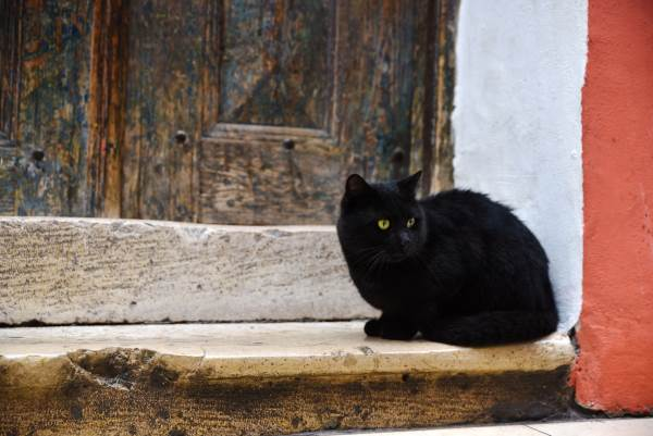 gatto nero superstizione3