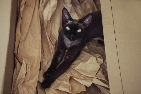 gatto nero superstizione6