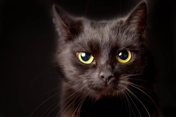 gatto nero superstizione8