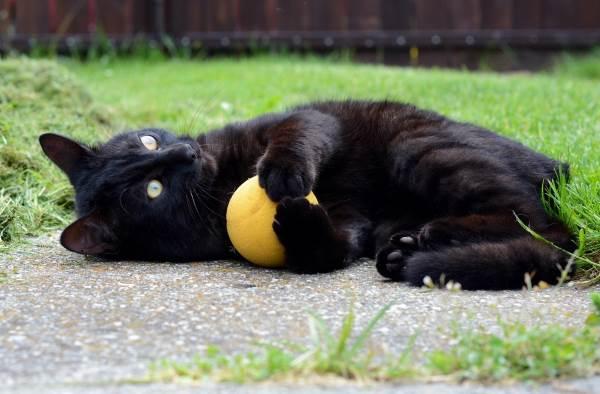 gatto nero superstizione9