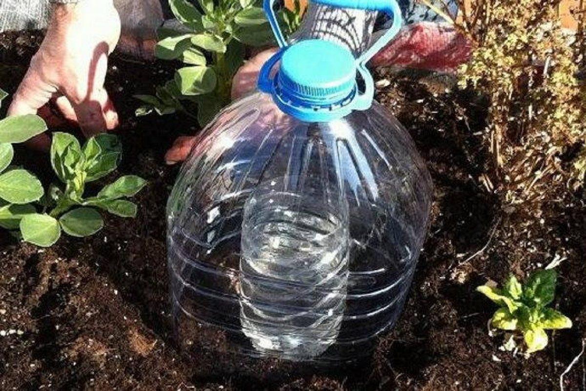 Bagnare Piante Con Bottiglie come realizzare un sistema di irrigazione solare a goccia
