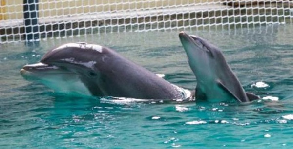 delfinari-nuoto-delfini