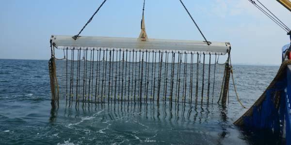 pesca elettrica divieto europa