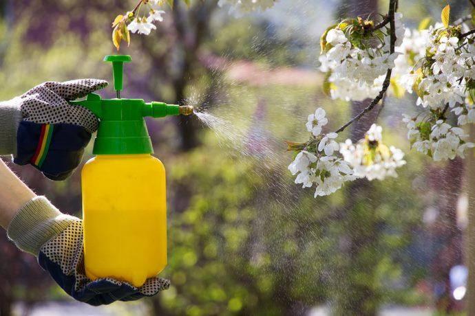 Pesticidi in città