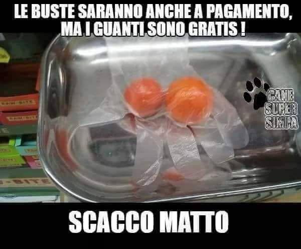 sacchetti13