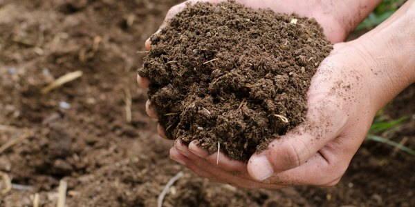sacchettibio compost