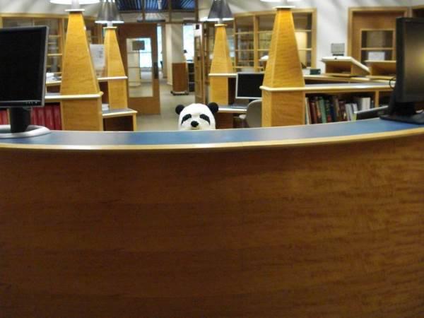 biblioteca divertente