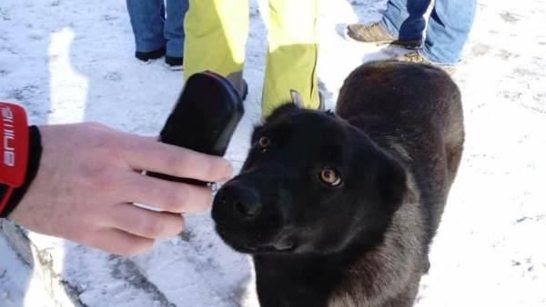 cani chernoby2