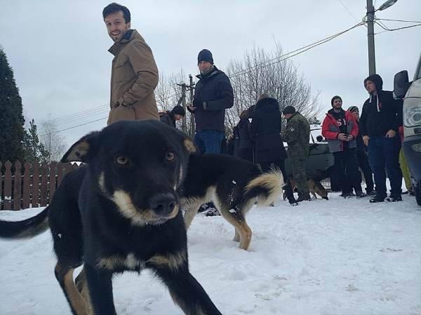 cani chernoby4