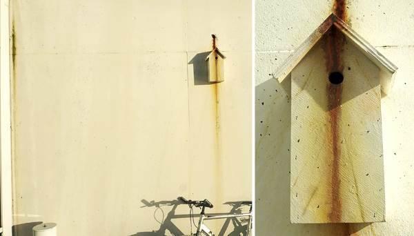 casa uccelli dambo6