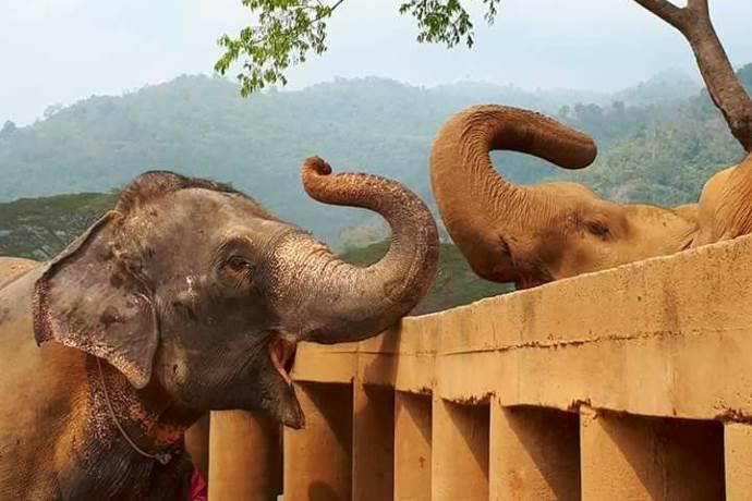 elefantessa-amicizia