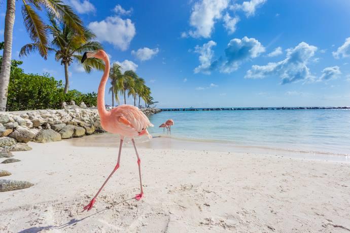 fenicotteri Bahamas