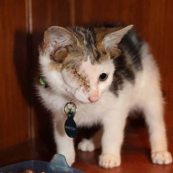 gattino 4orecchie1