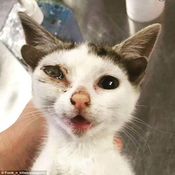 gattino 4orecchie3